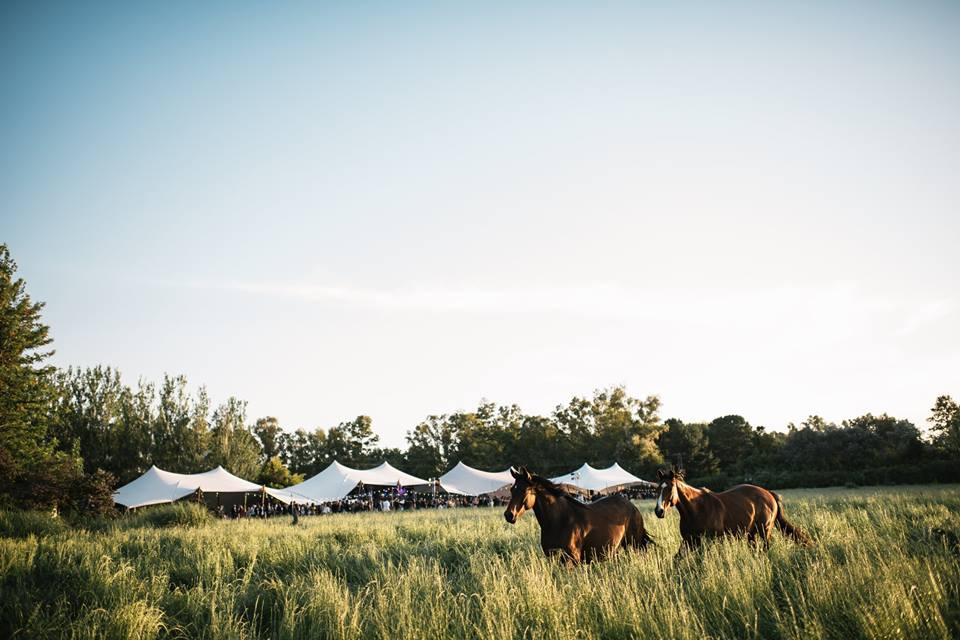 namiot stretch na polanie podczas wesela